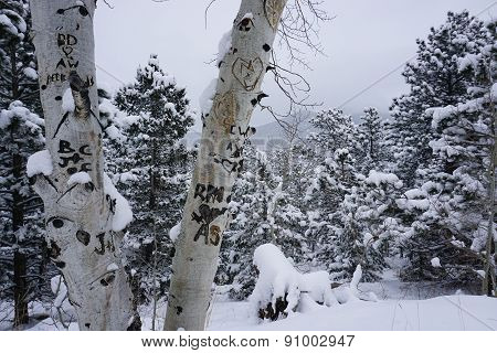 Snowy Winter Wonderland Scene in Colorado