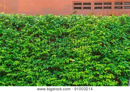 Green Plant With On Old Colored Concrete Wall