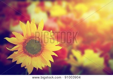 Sunflower among other spring summer flowers at sunshine. Nature vintage background
