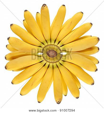 Fresh ripe bananas bunch isolated  white background. sun of bananas.
