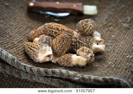 Fresh morel mushrooms / morels