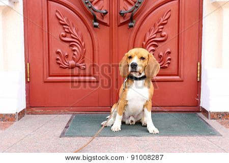 Funny cute dog near door at home