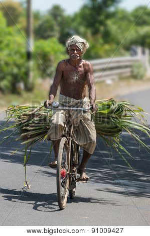 Older Man On Bicycle With Sugan Cane Stalks.