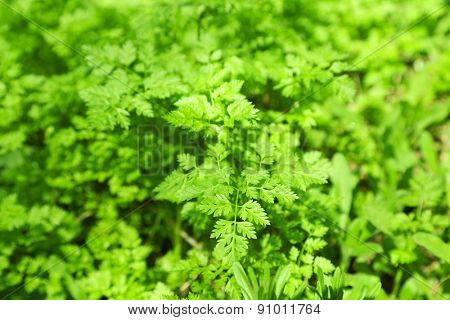 Green plants outdoors