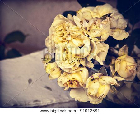 flower background with white roses,wedding card