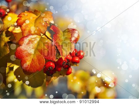 Fall background with yellow leaves, red berries