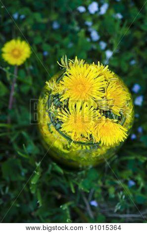 Yellow dandelion flowers