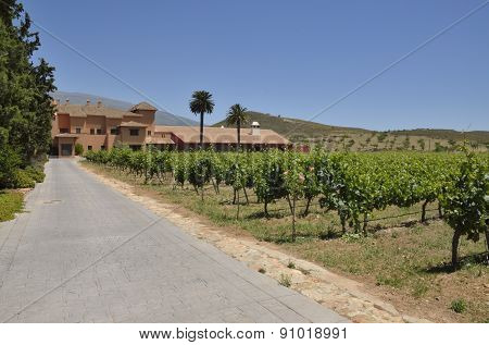 Hotel Among Vineyards