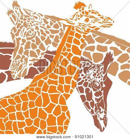 Giraffe colored heads
