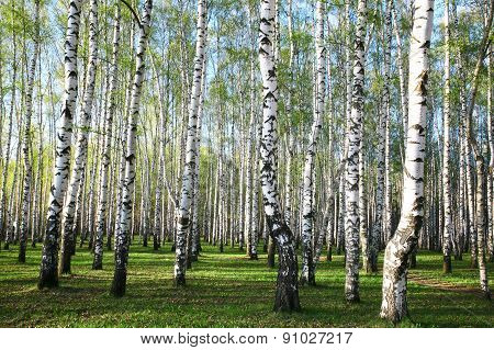 Spring Forest In The Evening