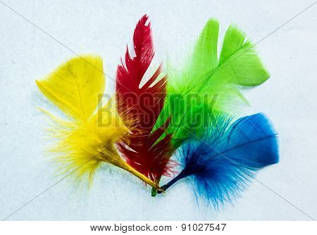 Four Colors Feathers