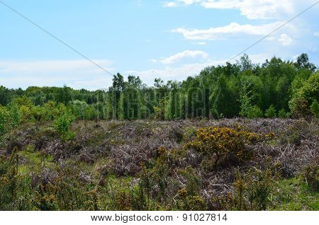 Open English heathland in Sussex.