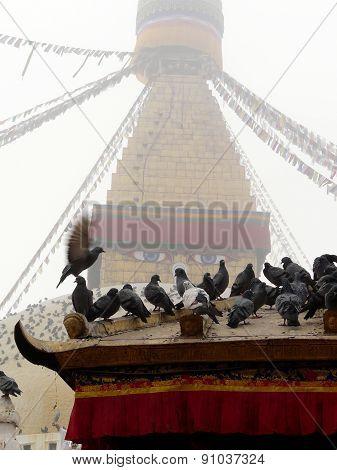 Nepal Pigeon Stupa