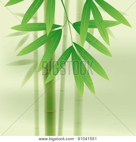 Bamboo stems and leaves on light green background