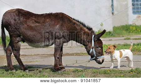 Photo funny donkey and dog