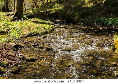 Beautiful forest landscape. Mountain forest. Forest mountain river.