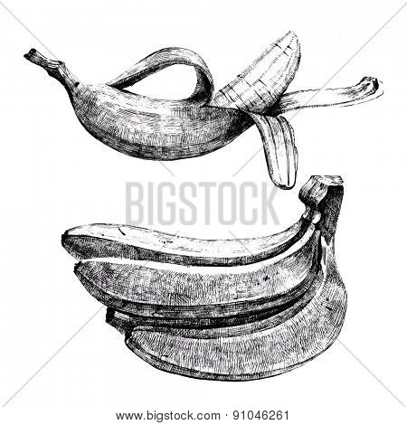 Hand drawn bananas on white background