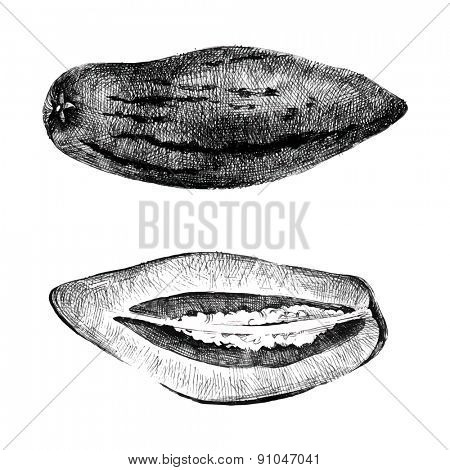 Hand drawn pepino melon on white background