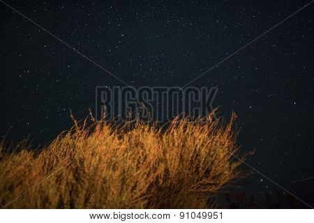 Stars And Bushes Illuminated By Fire.