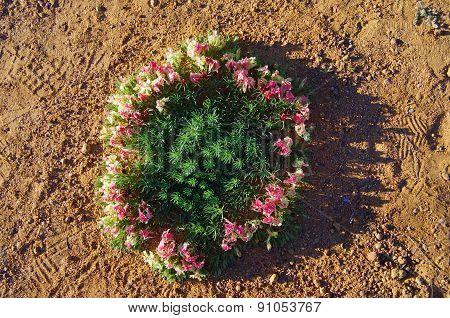 wreath flowers in Western Australia