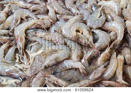 Fresh Shrimp At The Market For Sell