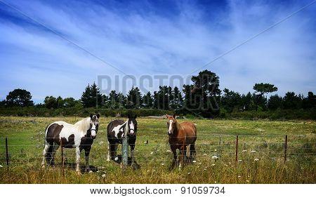 Horses on a field at horse farm.