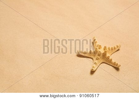 Summer background: starfish on the beach.