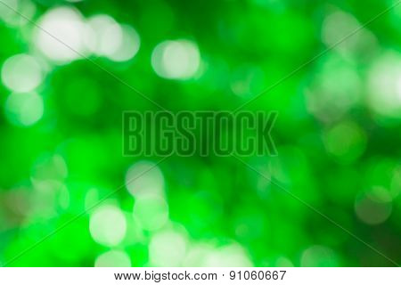 Blurred Light  Bokeh Abstract Green Background