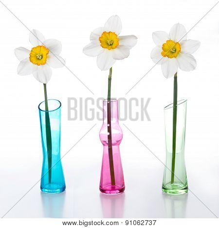 Three Narcissus