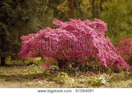 Pink glowing tree