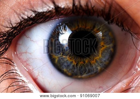 Macro Of A Woman's Beautiful Eyes