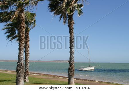 Lonely Boat And Palm Trees
