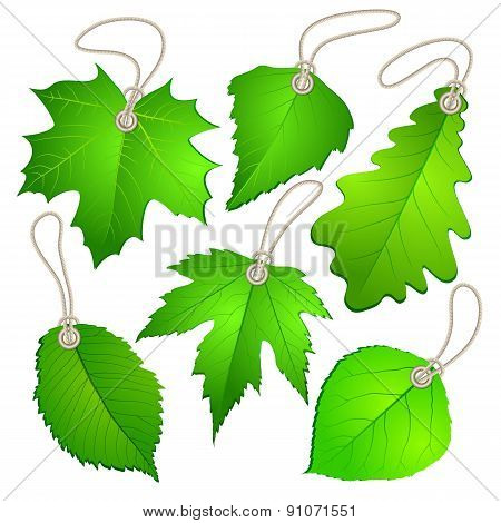 Hanging vector tags with green leaves.