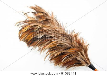 Feather Broom Isolated