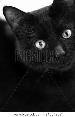 Black cat in dark close-up