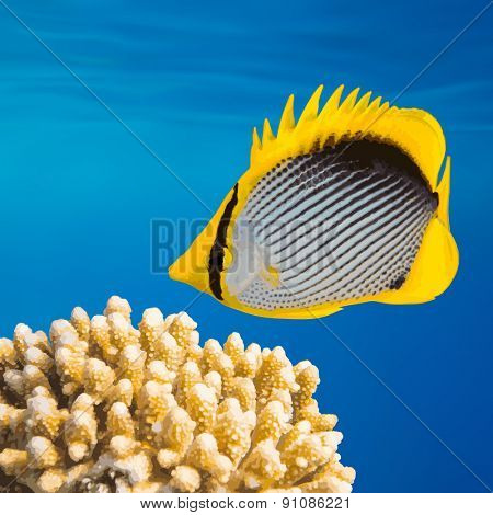 Tropical Fish and Coral Reef on Red Sea, vector EPS 8