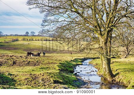 English rural scene with a stream and bare tree