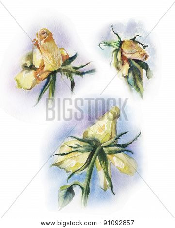 Set Of Withered Roses Watercolor