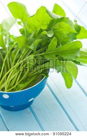 the fresh arugula leaves in bowl