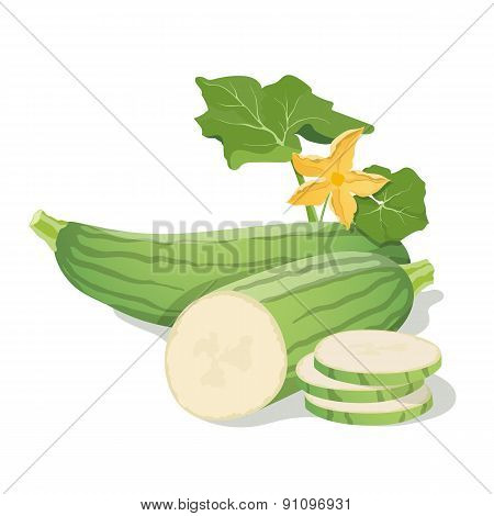 Vector marrow vegetables. Vector illustration