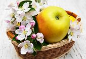 stock photo of apple blossom  - basket with apples and apple tree blossoms on a wooden table - JPG