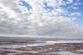 pic of flamingo  - Flamingos on Salar de Atacama. Chile. South America ** Note: Shallow depth of field - JPG