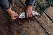 pic of trout fishing  - Trout. Freshly caught trout on a wooden background. Trout fishing. The caught fish. ** Note: Shallow depth of field - JPG