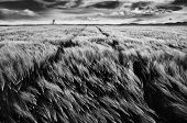 foto of windy  - Biker is driving with his bike by windy spring field under dramatically cloudy sky