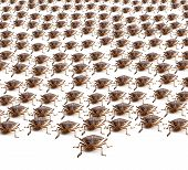 pic of shield-bug  - Large crowd of Brown Marmorated Stink Bug or Shield Bug isolated against white background - JPG