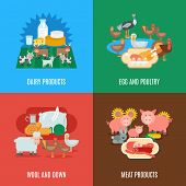 pic of poultry  - Domestic animal design concept set with dairy meat products eggs wool down and poultry flat icons isolated vector illustration - JPG