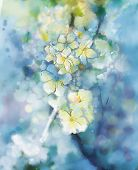 picture of apricot  - Abstract watercolor painting white Apricot tree flower in soft colorful and blur style with bokehSpring floral seasonal nature light blue background - JPG
