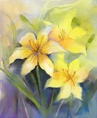 pic of lily  - Three Yellow lily flower - JPG