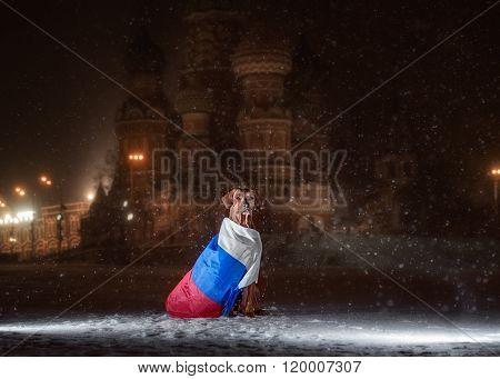 Dog Rhodesian Ridgeback and a Russian flag