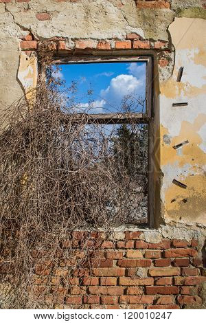 Nature Through A Window Of Abandoned House